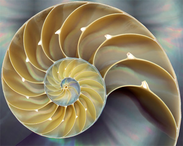The Golden Ratio in Architecture